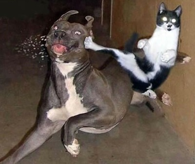 http://www.gunmajet.net/wp-content/uploads/2011/04/karate-cat.jpg